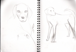 Labrador reference sheets